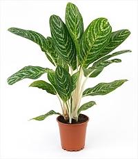 گیاه بین المللی